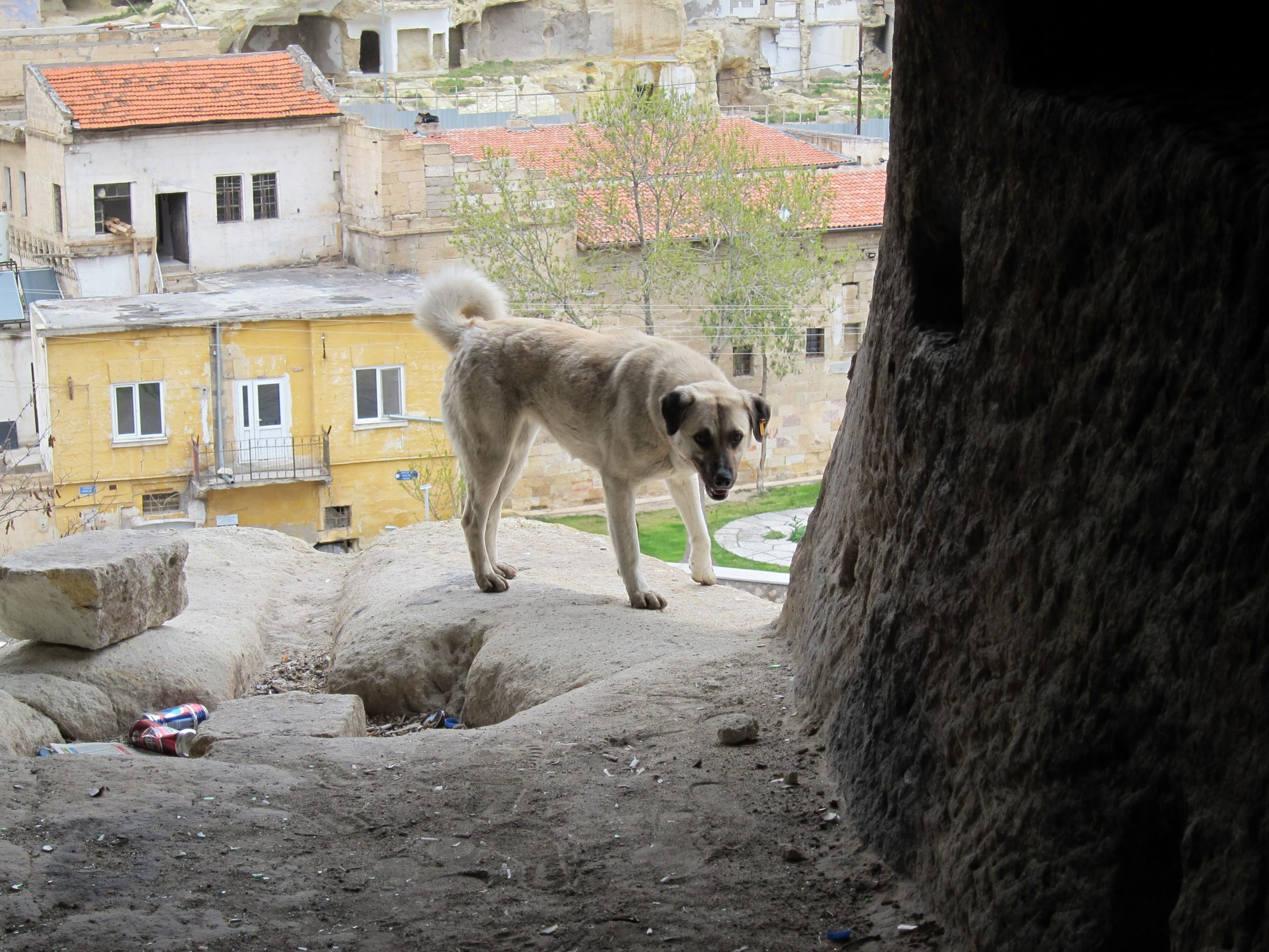 attaque de chiens Turquie
