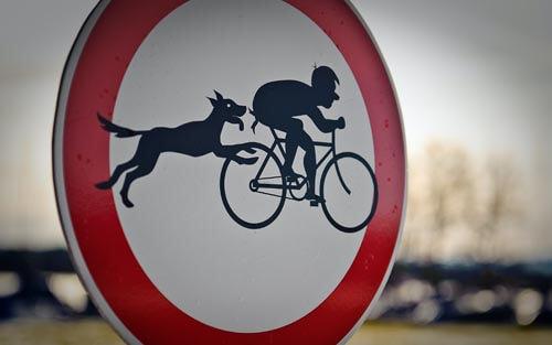 chien cyclotouriste