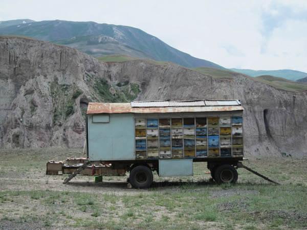 miel tadjik
