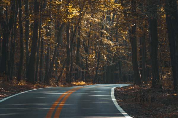 vent vélo forêt