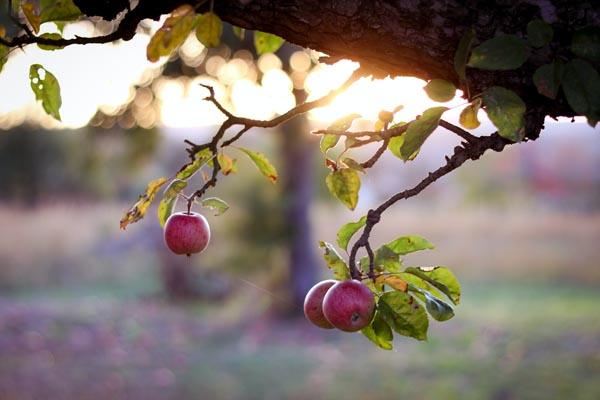 manger le fruit de la terre