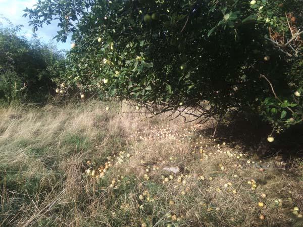 arbres fruitiers en bivouac