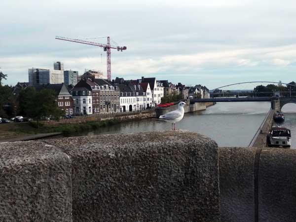 mouette à Maastricht